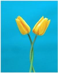 bloem. foto bij Stress, Spanning, Piekeren. Leer weer te ontspannen. AndJoy.nl